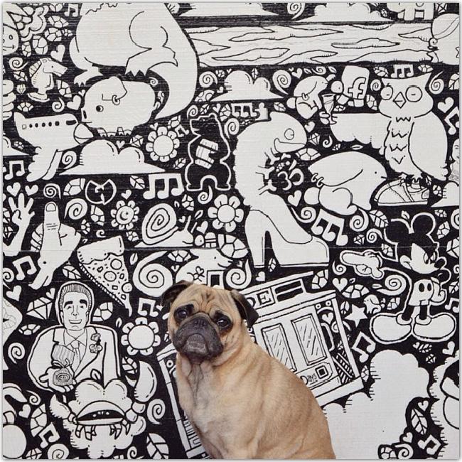 Norm le chien devant une fresque murale en noir et blanc