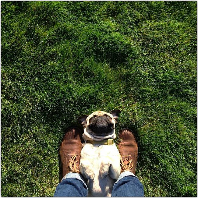 Norm le chien sur l'herbe entre les pieds de quelqu'un