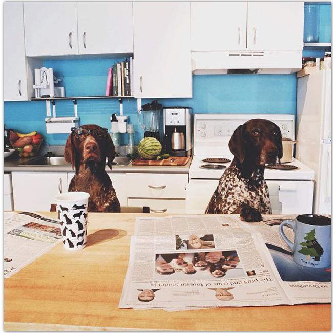 Les pointer brothers dans la cuisine imitent des comportements humains