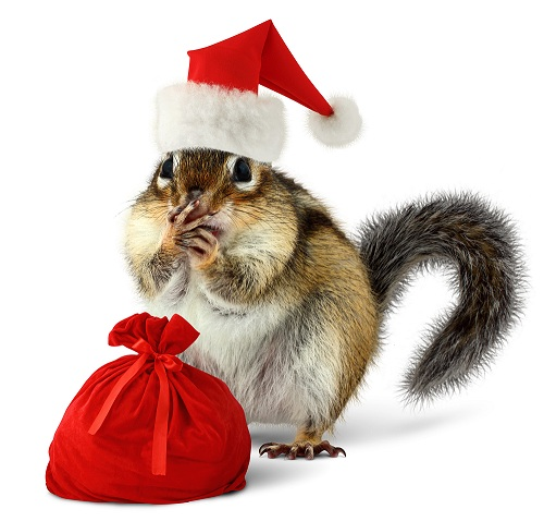 Noël arrive, profitez-en!
