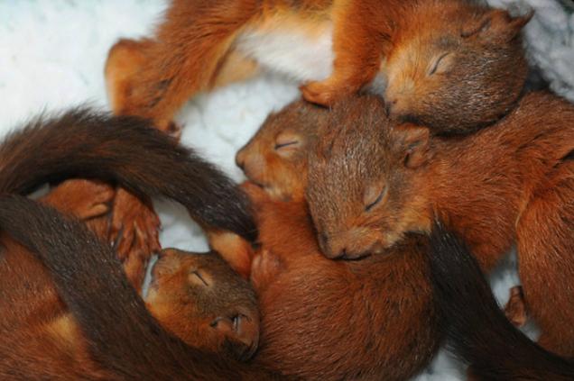 Bébés écureuils