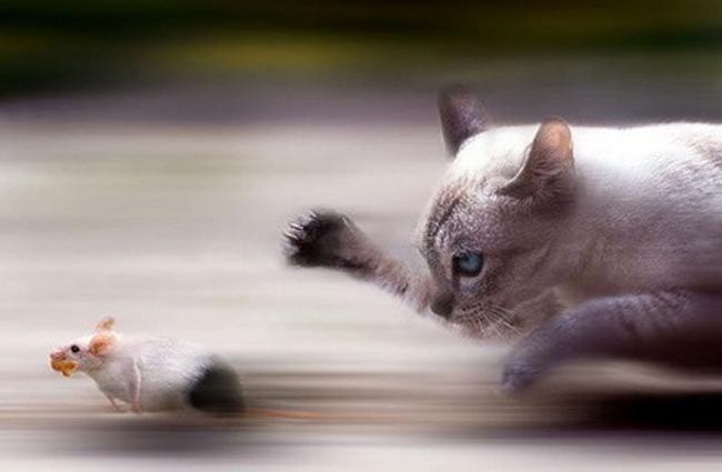 des photos au timing parfait