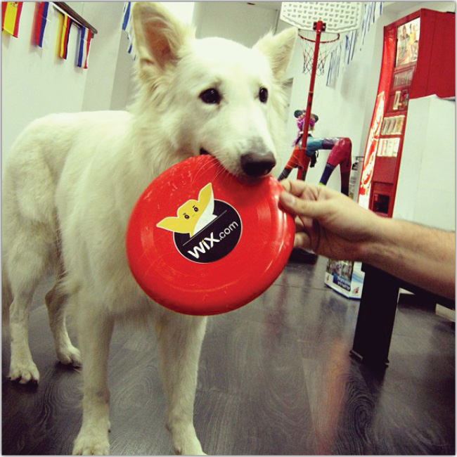 Les photos Instagram de la semaine : les animaux à l'honneur