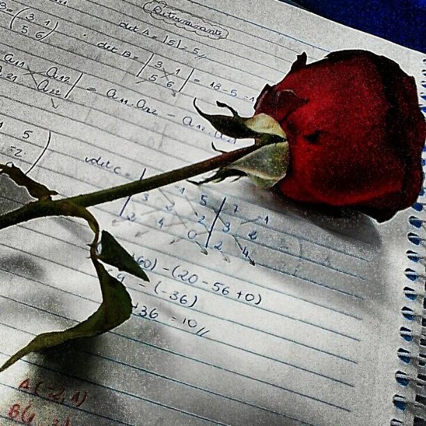 rose sur un cahier