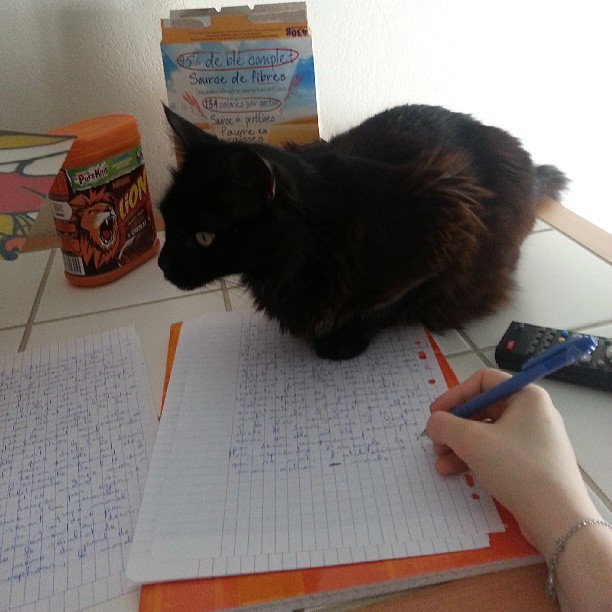 Chat sur cahier