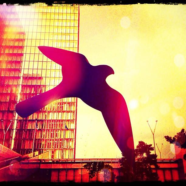 Couchée de soleil derrière un oiseau