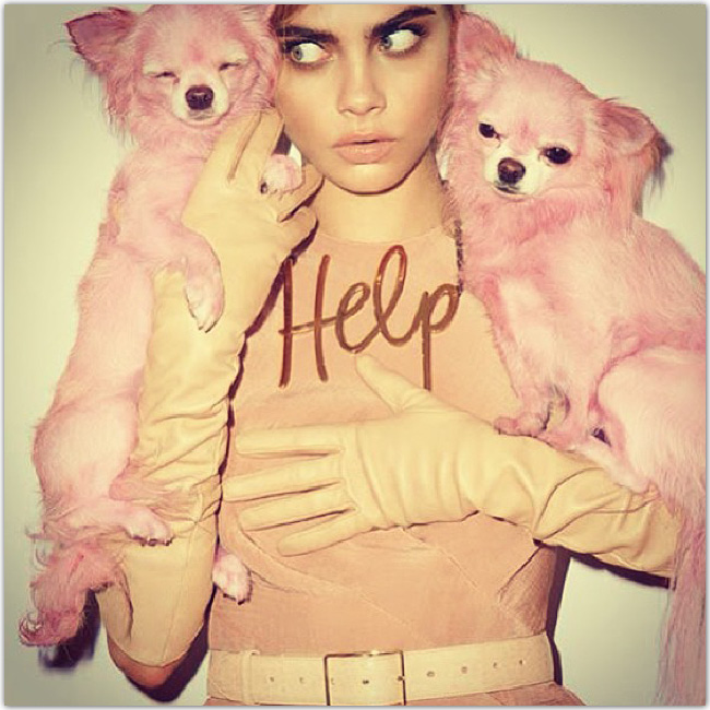 Femme avec deux chiens roses