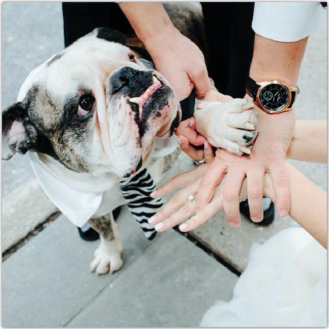 Une main d'homme, une main de femme de femme et une patte de chien superposées