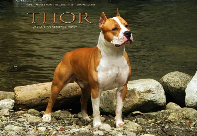 Amstaff Thor