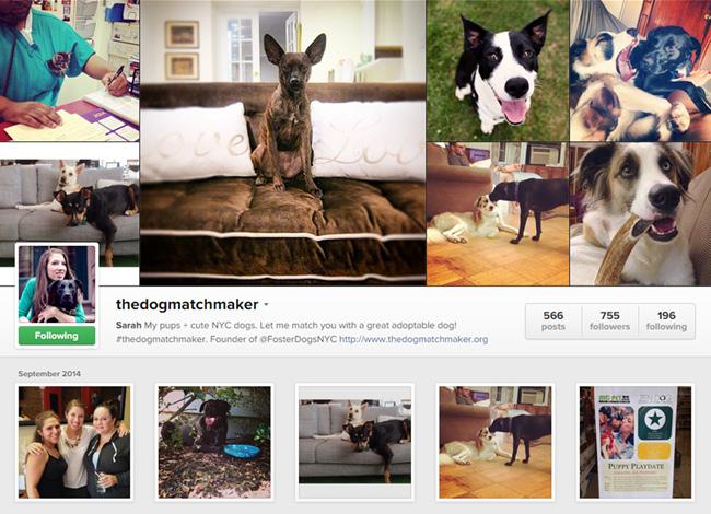 The Dog Matchmaker sur Instagram