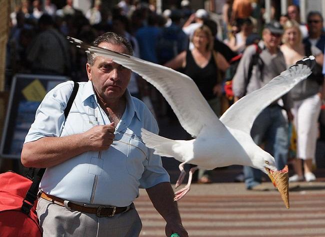 Homme qui se fait voler sa glace par un oiseau