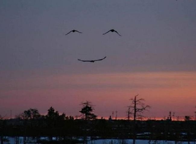 Groupe d'oiseaux qui forment un sourire