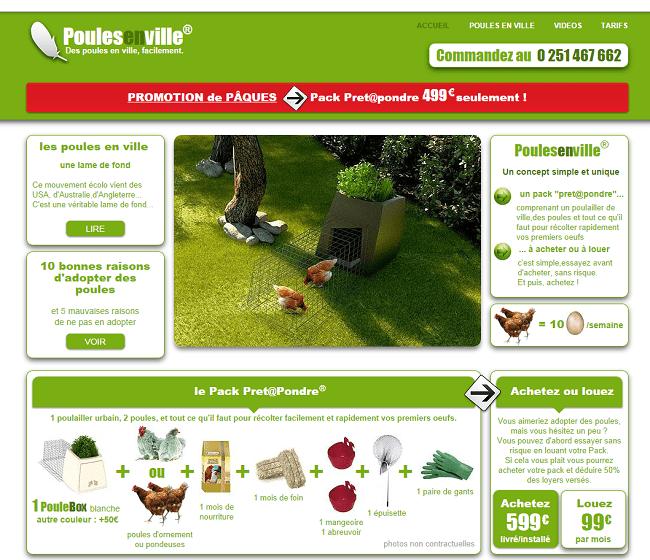 Poules en ville : location ou achat de poules