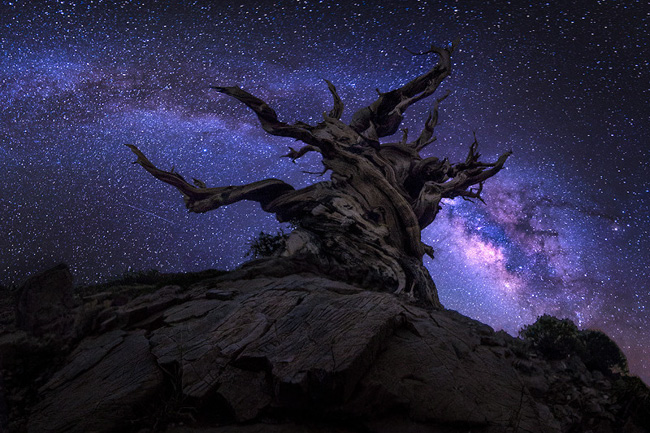 Night Sky at Sierra High Country par Jesse L. Summers