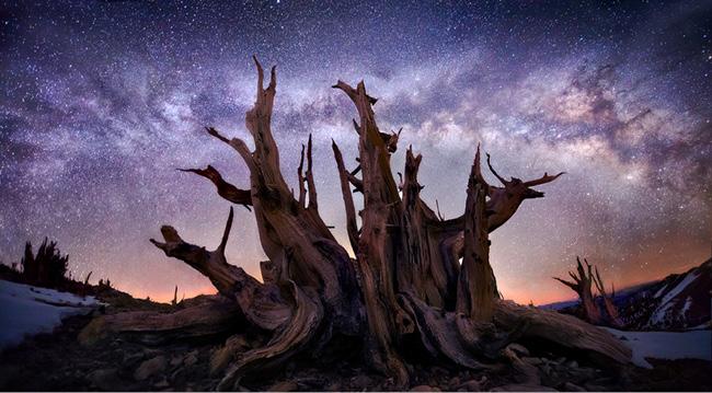 Milky Way in the White Mountains, California, par Marc Adamus
