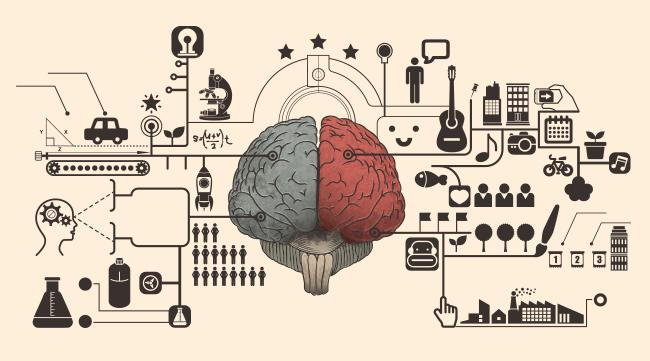 Cerveau Biais Cognitifs