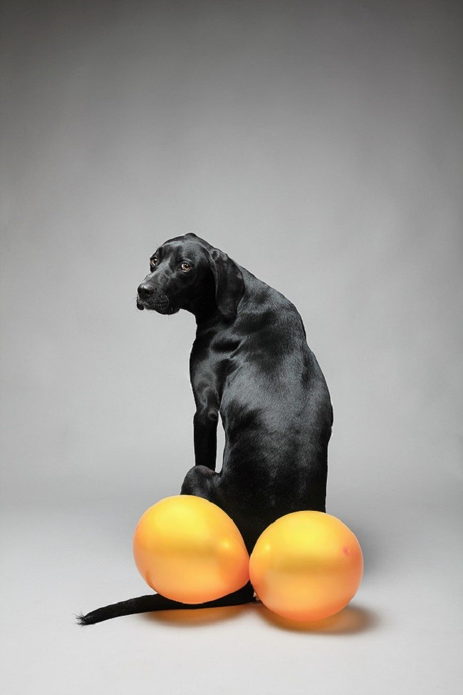 Chien Ballon Benjamin Deroche