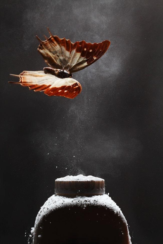 Papillon talc Benjamin Deroche