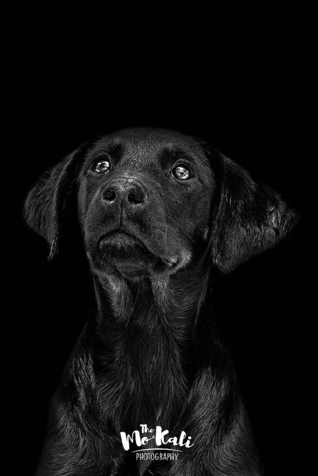 Chien Portrait Mo Kali