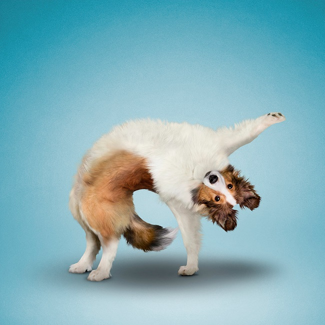 Yoga Chien Drôle Dan Borris