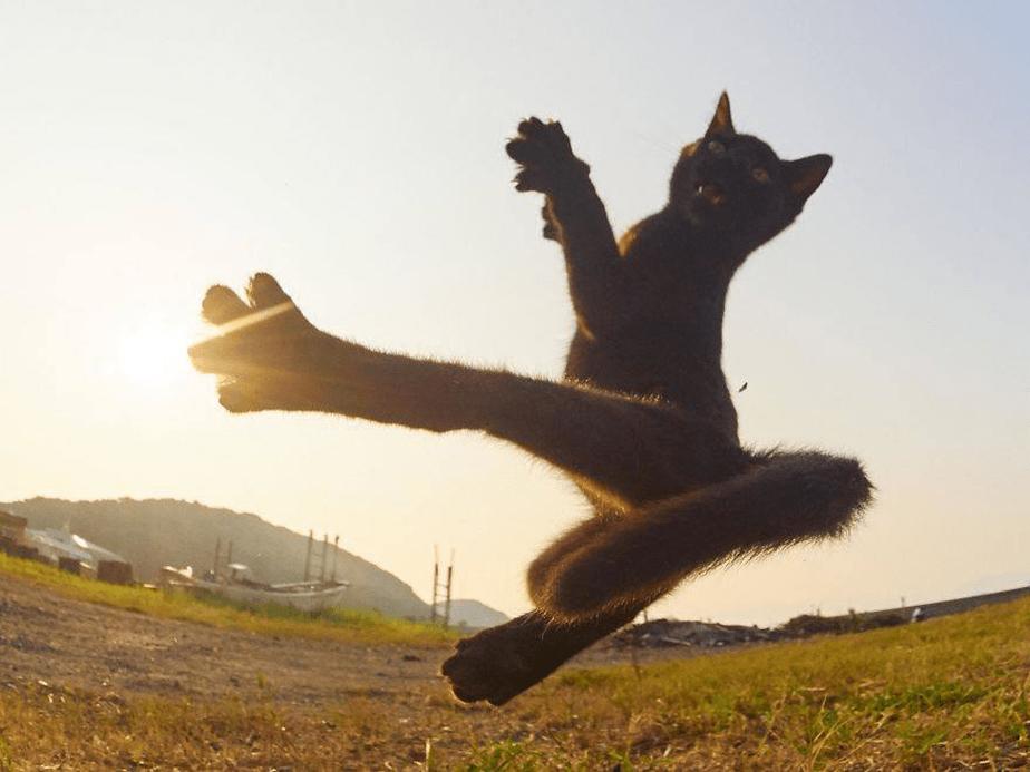 Un chat ninja