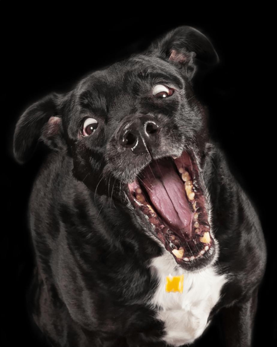 Un chien qui fait la grimace